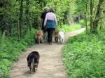 on the dog trail
